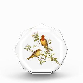 Pájaros del vintage