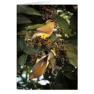 Pájaros del Waxwing de cedro que saludan Tarjeta De Felicitación