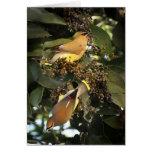Pájaros del Waxwing de cedro que saludan Tarjeton