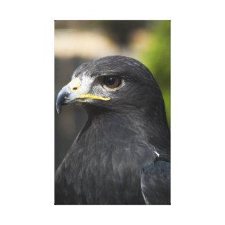 Pájaros del zumbador de la presa lona envuelta para galerías