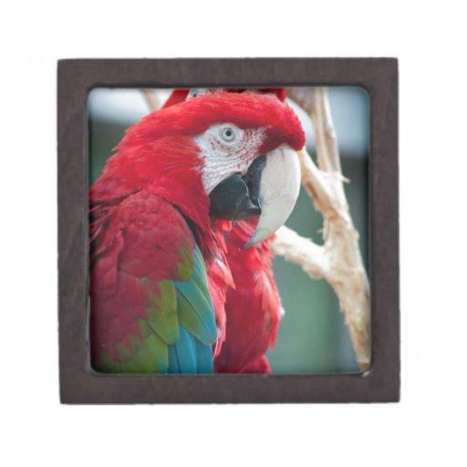 Pájaros disimulados cajas de regalo de calidad