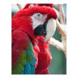 Pájaros disimulados membretes personalizados
