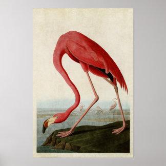 Pájaros el pipe% americanos del flamenco el | de póster