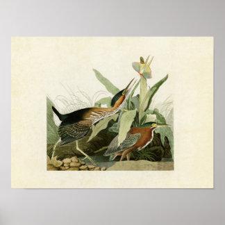 Pájaros el pipe% verdes de la garza el | de la póster