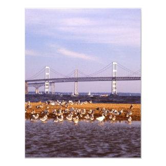 """Pájaros en bahía de Chesapeake Invitación 4.25"""" X 5.5"""""""