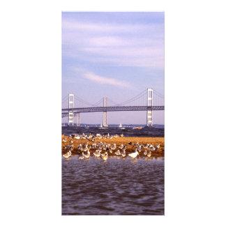 Pájaros en bahía de Chesapeake Tarjetas Personales Con Fotos