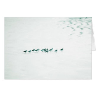 Pájaros en blanco tarjeta de felicitación
