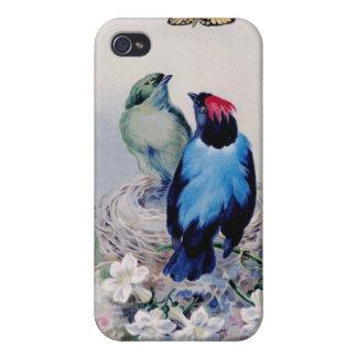 Pájaros en caso de la jerarquía iPhone 4 protectores