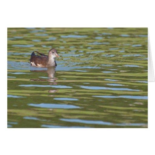 Pájaros en el agua brillante tarjetón
