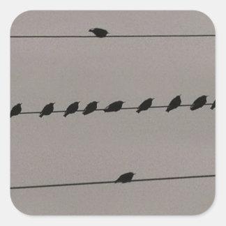 Pájaros en el alambre pegatina cuadrada
