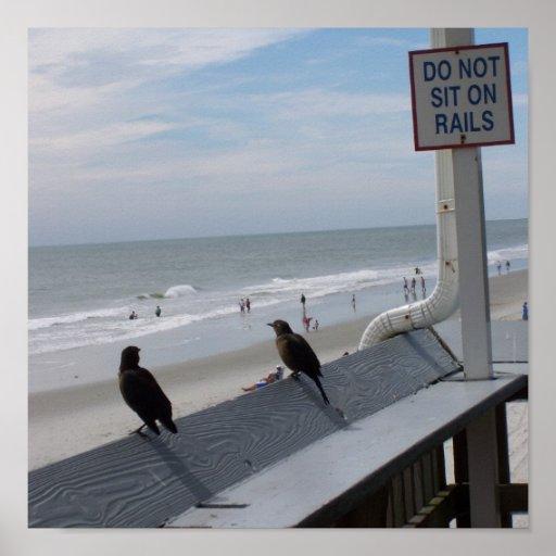 Pájaros en el carril poster