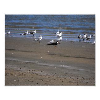 Pájaros en la foto de la playa fotografía
