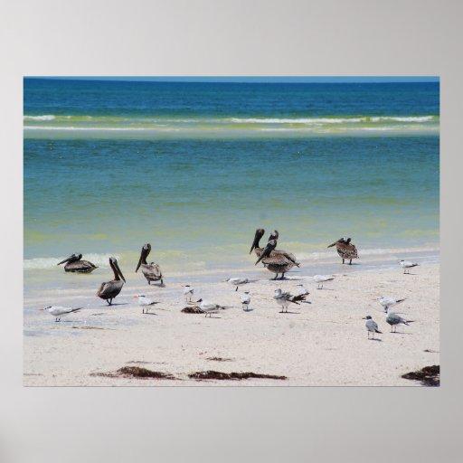 Pájaros en la llave de Anclote Posters