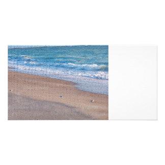 pájaros en la orilla de mar del crujido de la tarjetas personales con fotos