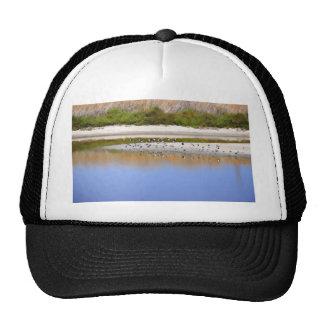 Pájaros en la orilla del río gorras