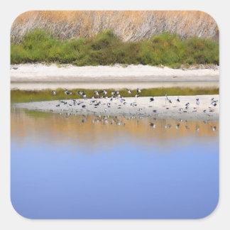 Pájaros en la orilla del río pegatina cuadrada