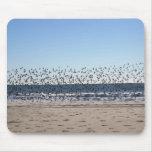 Pájaros en la playa alfombrillas de raton
