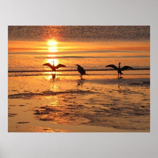Pájaros en la playa impresiones