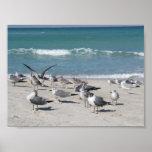 Pájaros en la playa poster
