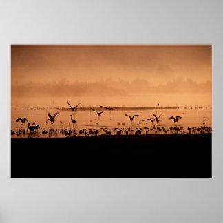 Pájaros en la salida del sol póster