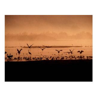 Pájaros en la salida del sol postal