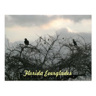 Pájaros en la tormenta tarjetas postales