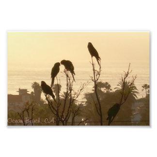 Pájaros en paraíso fotografia