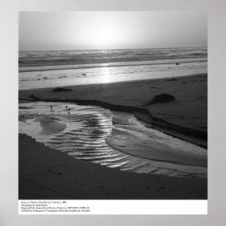 Pájaros en una playa, Santa Barbara, 1966 Posters