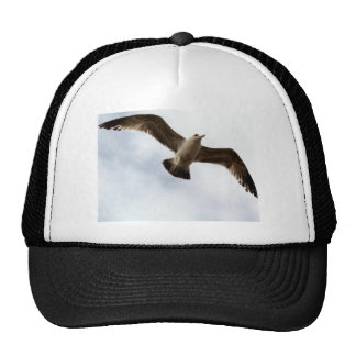 Pájaros en vuelo gorras de camionero
