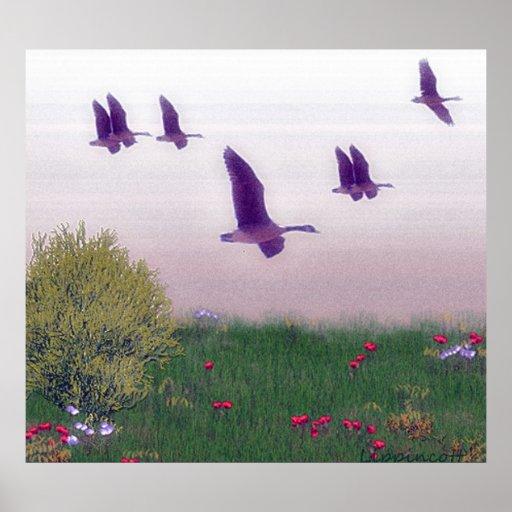 pájaros en vuelo póster
