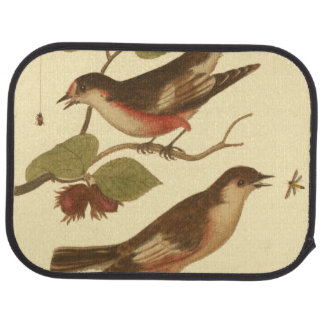 Pájaros encaramados en las ramas que comen alfombrilla de coche