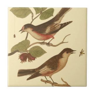Pájaros encaramados en las ramas que comen azulejo
