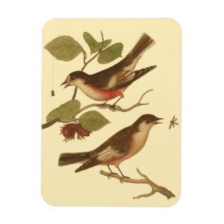 Pájaros encaramados en las ramas que comen imanes de vinilo
