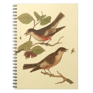 Pájaros encaramados en las ramas que comen cuaderno