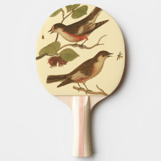 Pájaros encaramados en las ramas que comen pala de tenis de mesa