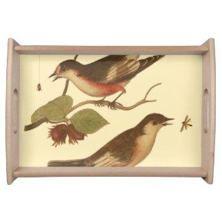 Pájaros encaramados en las ramas que comen bandejas