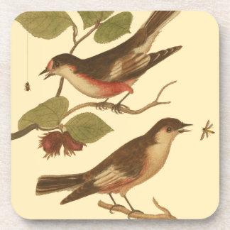 Pájaros encaramados en las ramas que comen posavasos de bebida