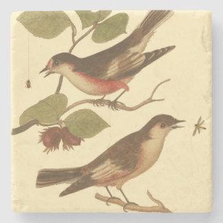 Pájaros encaramados en las ramas que comen posavasos de piedra