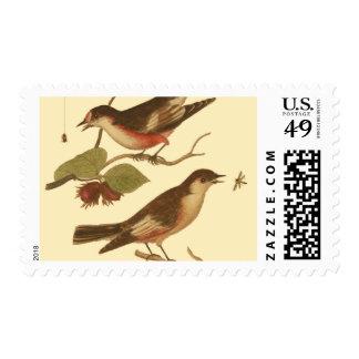 Pájaros encaramados en las ramas que comen franqueo