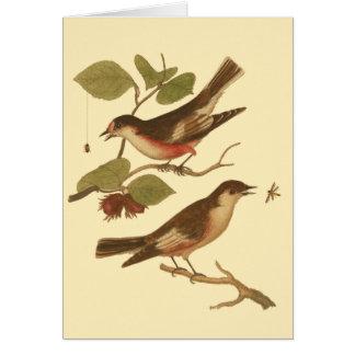 Pájaros encaramados en las ramas que comen tarjetón