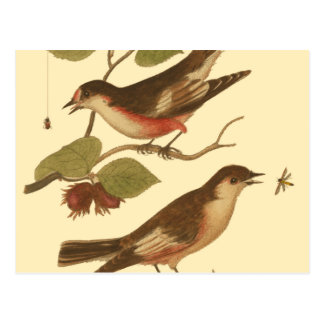 Pájaros encaramados en las ramas que comen tarjeta postal