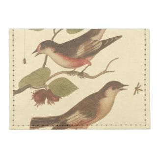 Pájaros encaramados en las ramas que comen tarjeteros tyvek®