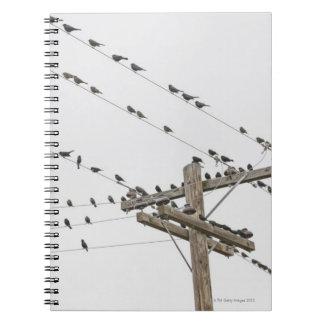 Pájaros encaramados en los alambres libros de apuntes con espiral