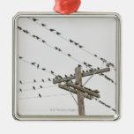 Pájaros encaramados en los alambres ornatos