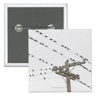 Pájaros encaramados en los alambres pins
