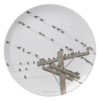 Pájaros encaramados en los alambres plato de comida
