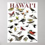 Pájaros endémicos de Hawai'i Impresiones