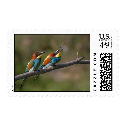 Pájaros Envio