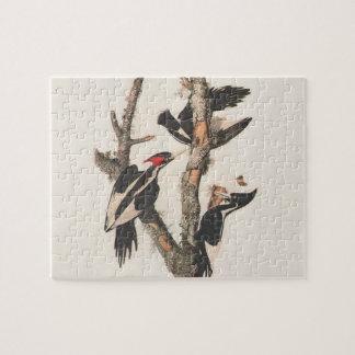 Pájaros extintos: Audubon Marfil-Cargó en cuenta l Rompecabezas Con Fotos