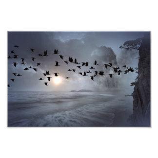 pájaros cojinete